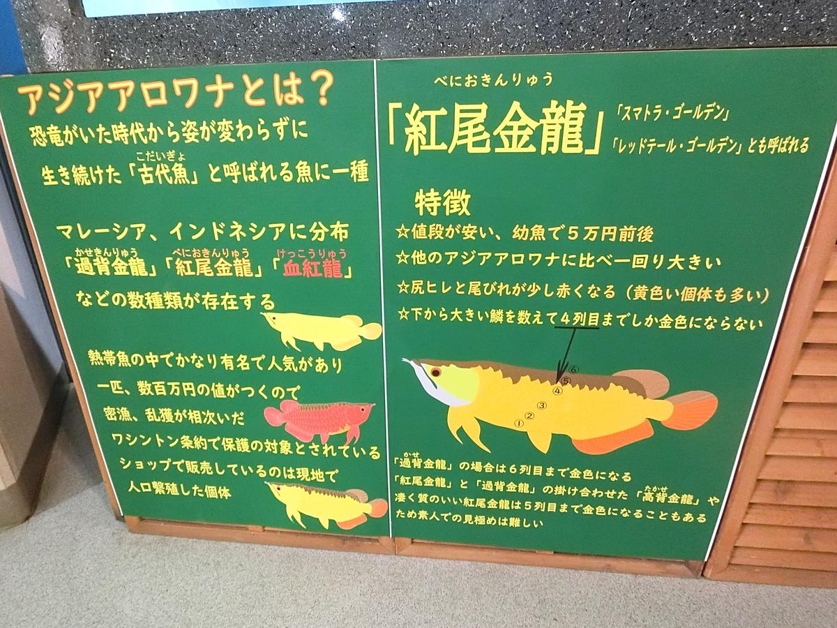 f:id:berao-setouchi-fishing:20210211214739j:plain