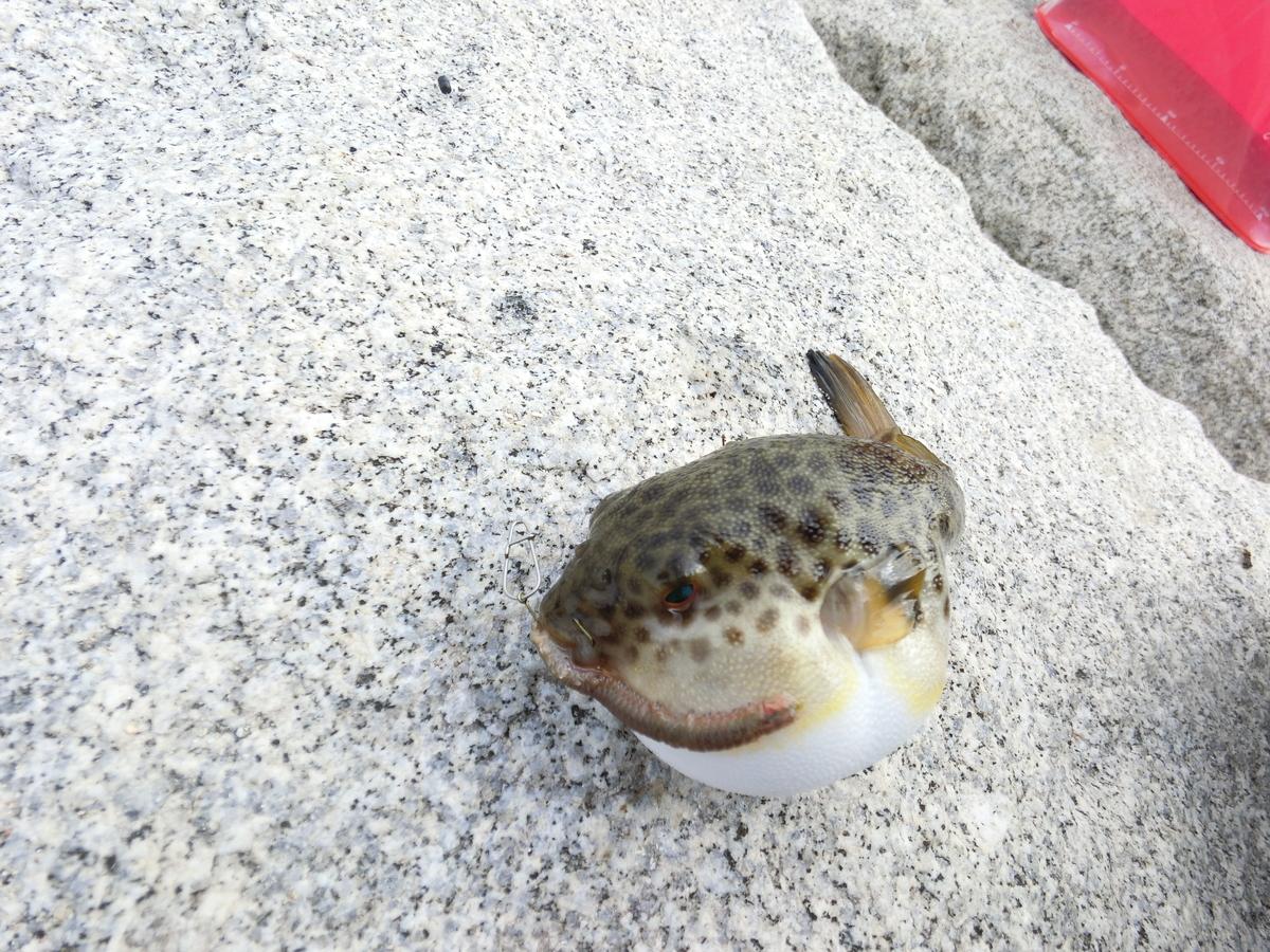 f:id:berao-setouchi-fishing:20210213215755j:plain