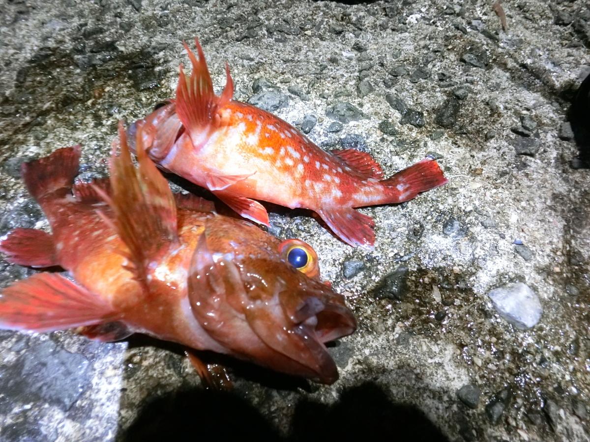 f:id:berao-setouchi-fishing:20210509112846j:plain