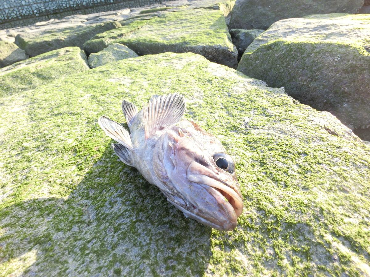 f:id:berao-setouchi-fishing:20210530103521j:plain