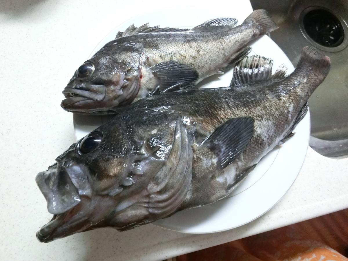 f:id:berao-setouchi-fishing:20210530103704j:plain