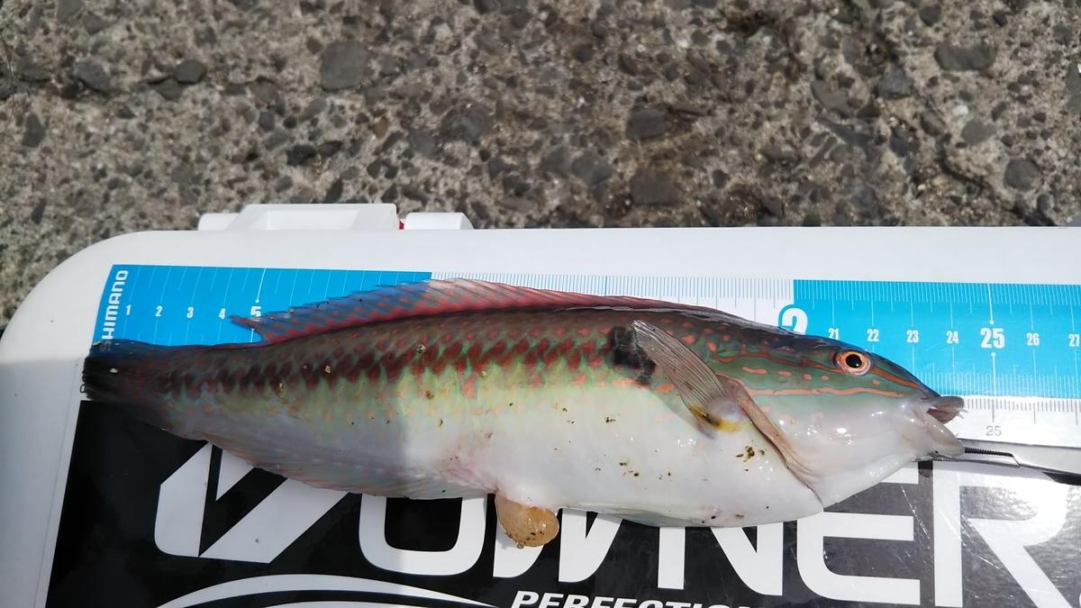 f:id:berao-setouchi-fishing:20210625000105j:plain