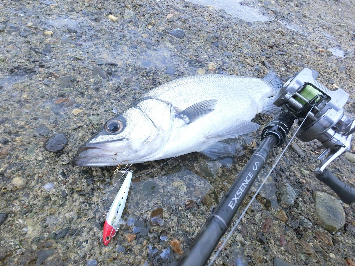 f:id:berao-setouchi-fishing:20210703145911j:plain