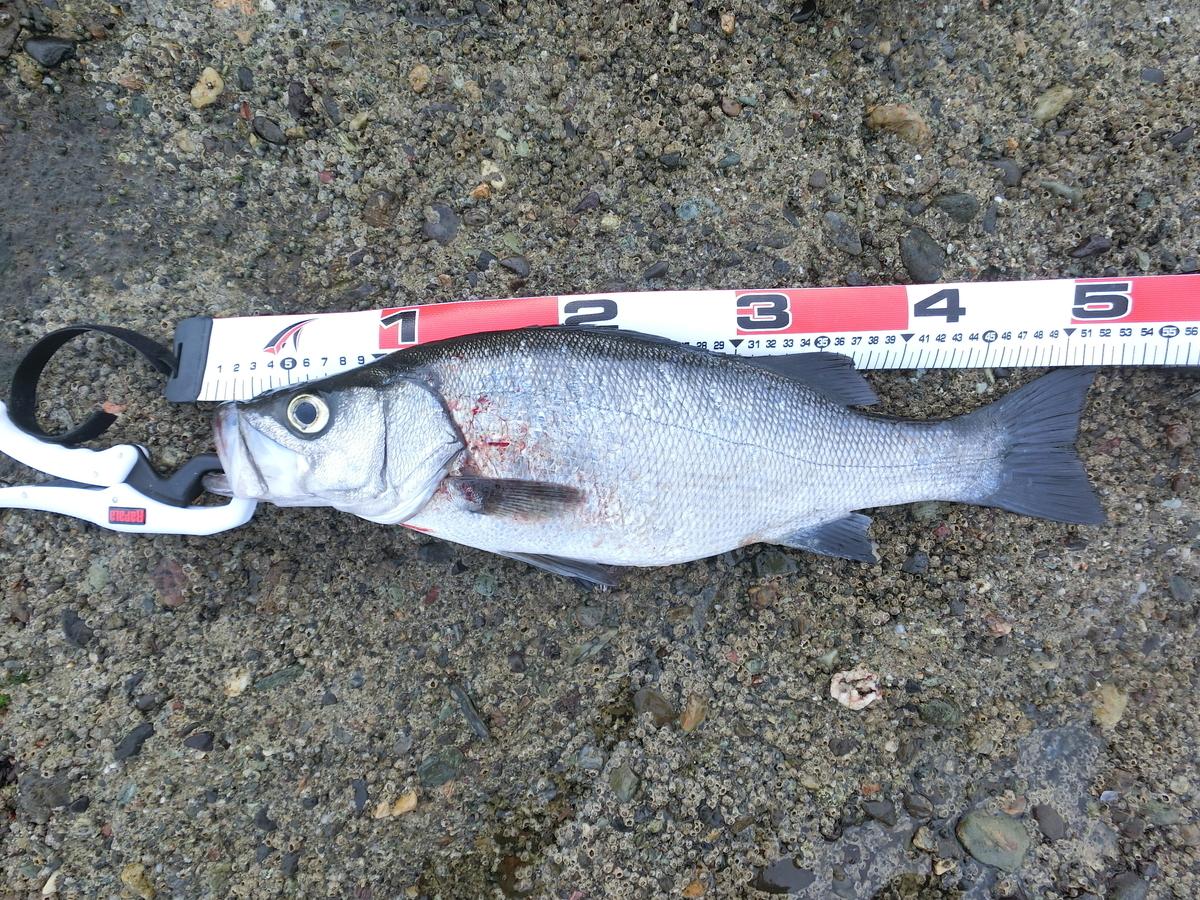 f:id:berao-setouchi-fishing:20210703145921j:plain