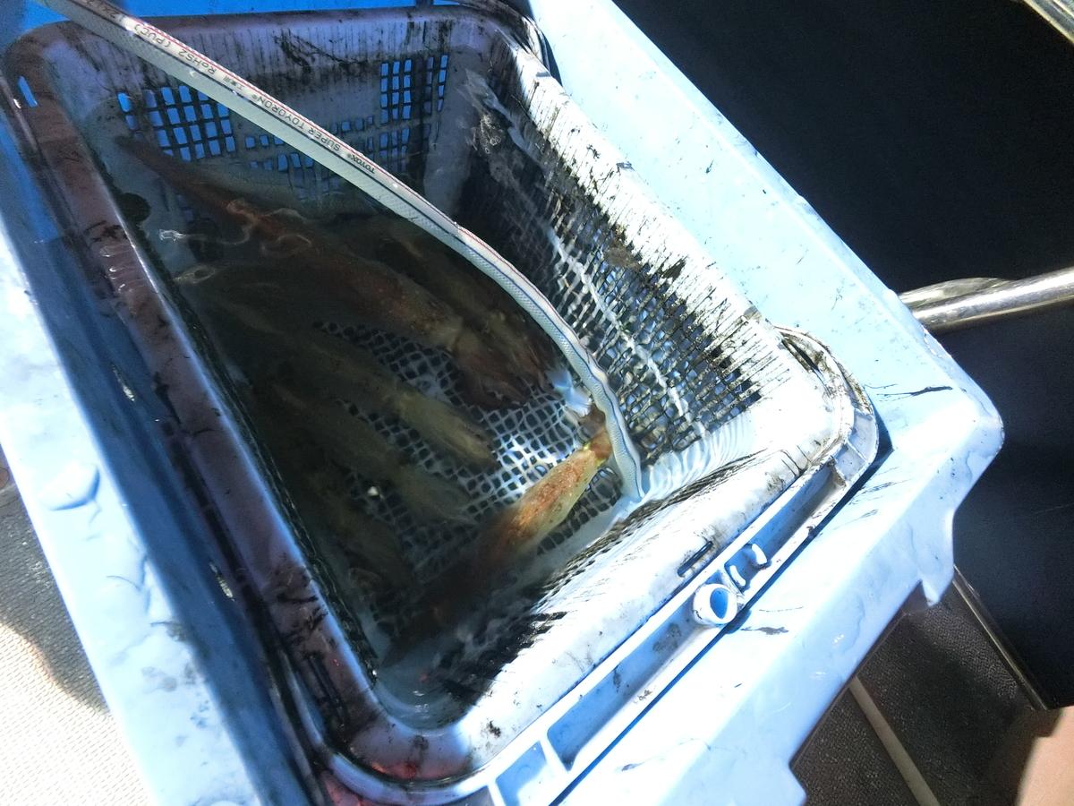 f:id:berao-setouchi-fishing:20210809002525j:plain