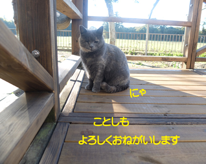 f:id:beriru:20170101135500j:plain