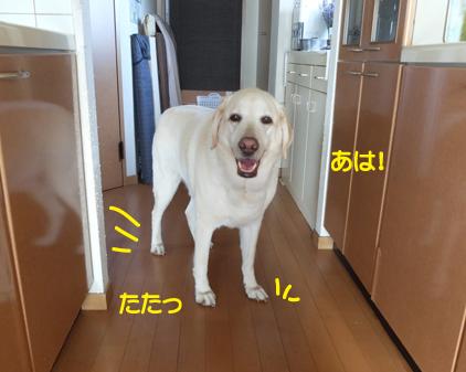 f:id:beriru:20180701153732j:plain