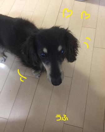 f:id:beriru:20180712062159j:plain