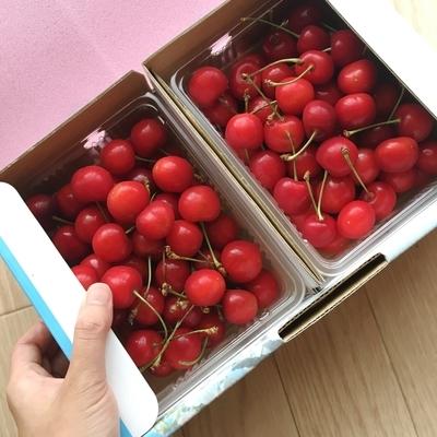 f:id:berry-no-kurashi:20190628115220j:plain