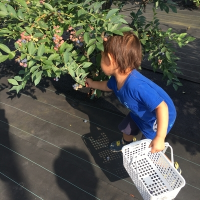 f:id:berry-no-kurashi:20210724223407j:plain