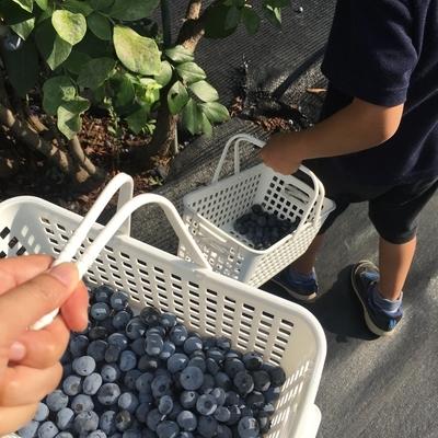 f:id:berry-no-kurashi:20210724223454j:plain