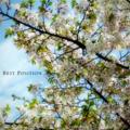 [花][桜]葉桜