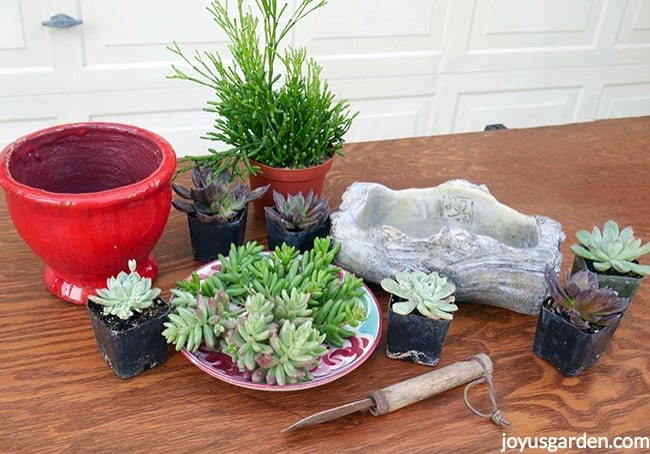 best soil for succulents in pots for indoors