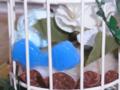 [スイーツデコ][カップケーキ][リボン][鳥かご]RentalBox-201210_3