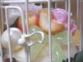 [スイーツデコ][カップケーキ][リボン][鳥かご]RentalBox-201210_6