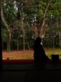[大徳寺][高桐院]koutouin_07