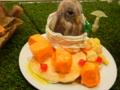 [チャレンジ徳島芸術祭][スイーツデコ][パンケーキ][マンゴー][フクロウ]CTAF2014-ER_34