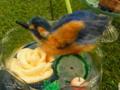 [チャレンジ徳島芸術祭][スイーツデコ][ソーダフロート][カワセミ]CTAF2014-ER_40