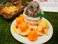 [チャレンジ徳島芸術祭][スイーツデコ][パンケーキ][マンゴー][フクロウ]CTAF2014-ER_58