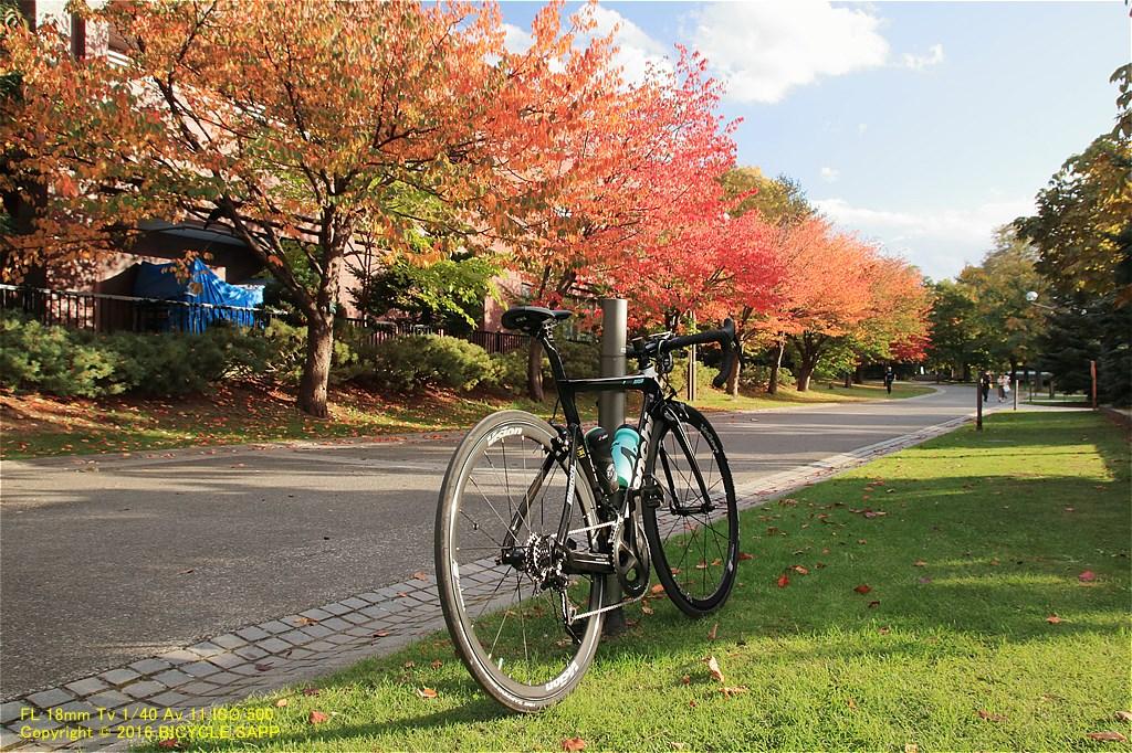 f:id:bicycle-sapp:20201022184139j:plain