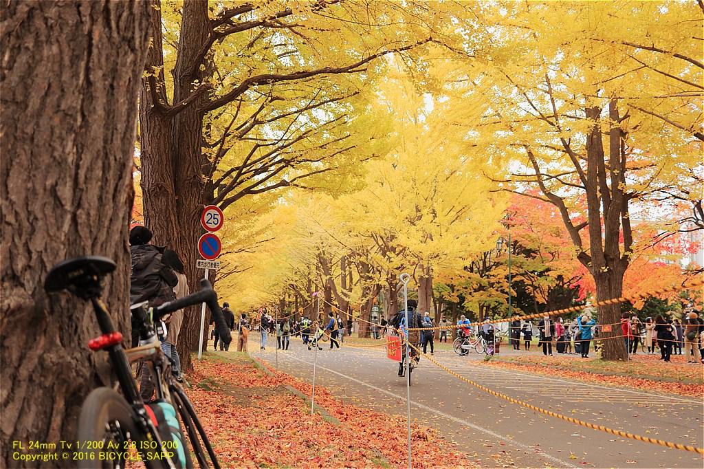 f:id:bicycle-sapp:20201105220926j:plain