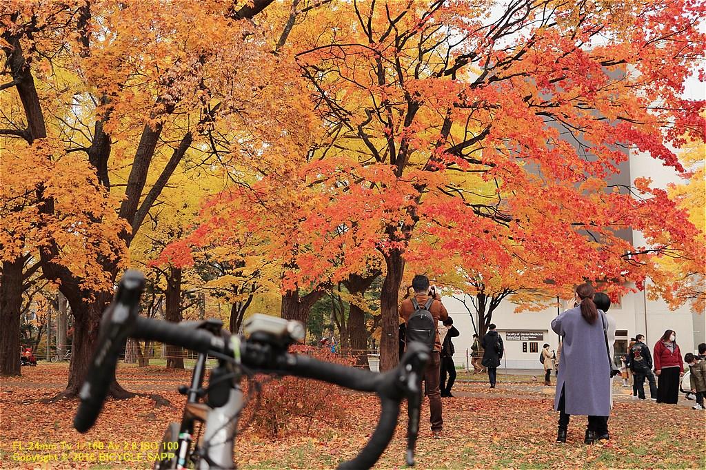 f:id:bicycle-sapp:20201105220954j:plain