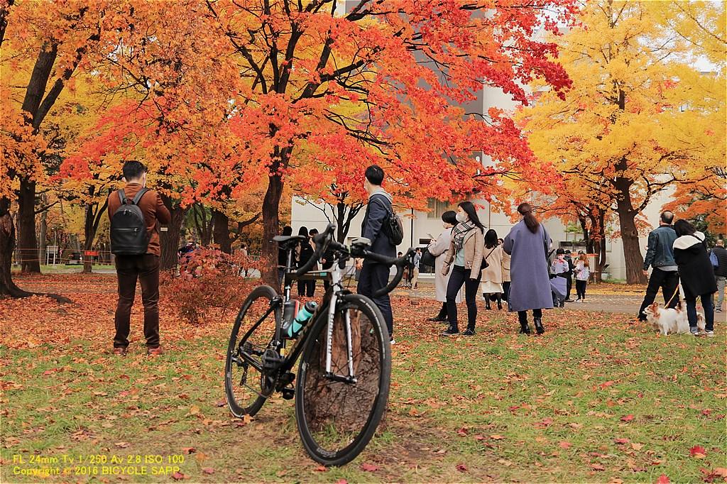 f:id:bicycle-sapp:20201105221013j:plain