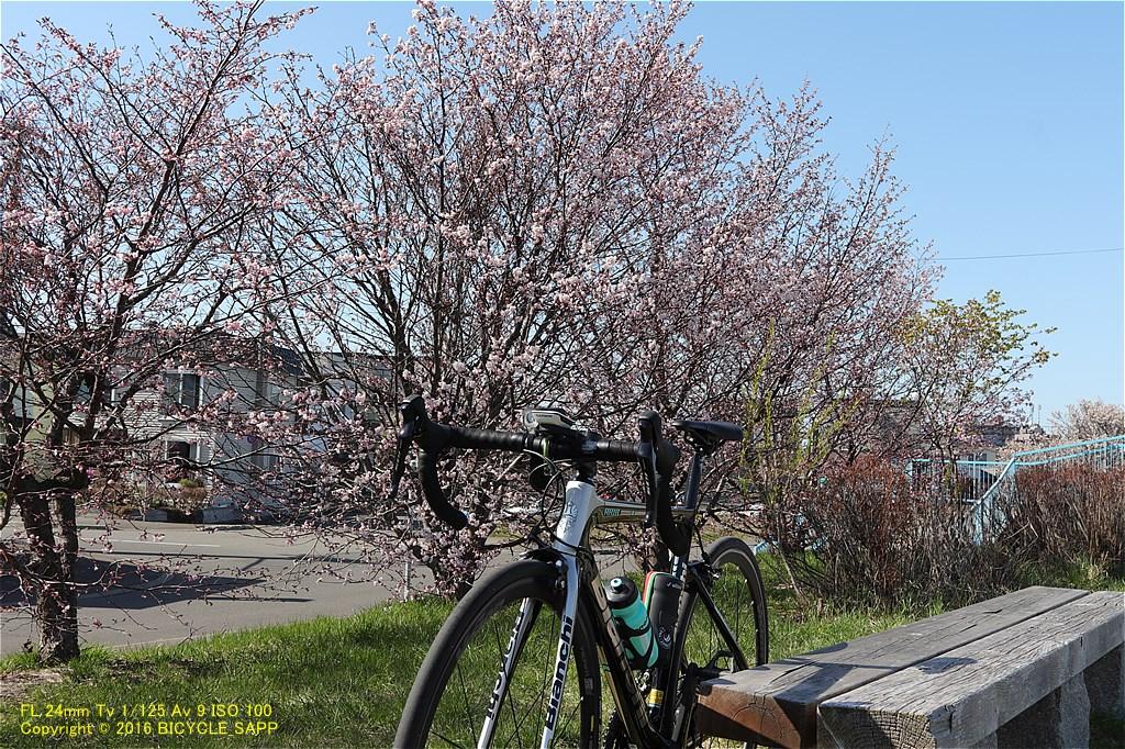 f:id:bicycle-sapp:20210425145102j:plain