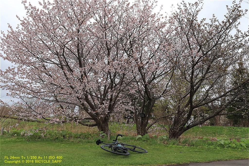 f:id:bicycle-sapp:20210508220948j:plain