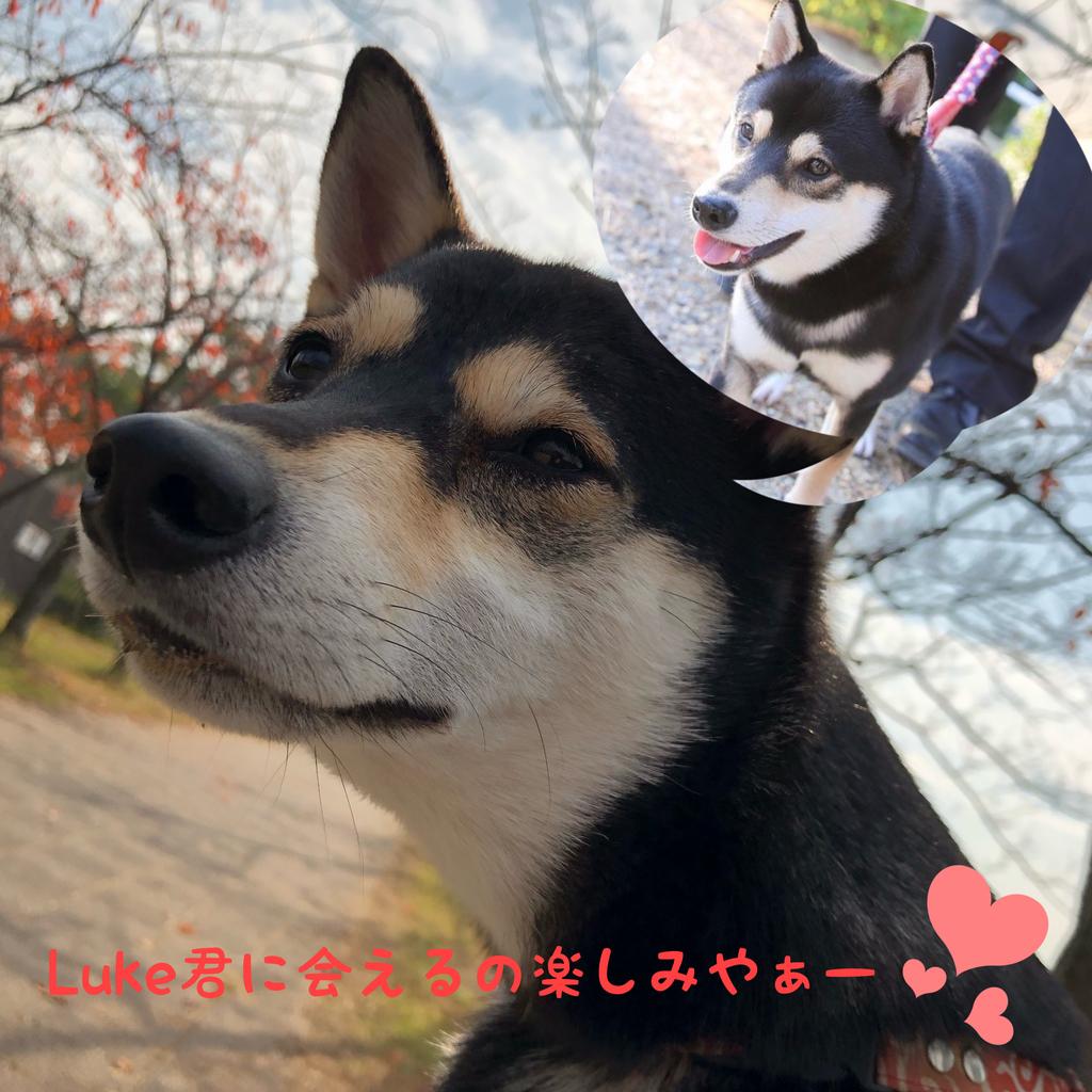 f:id:big-yamatohou:20190103172615j:plain