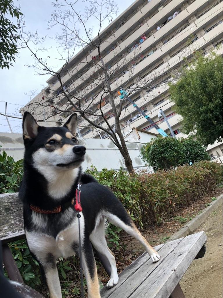 f:id:big-yamatohou:20190210194856j:image