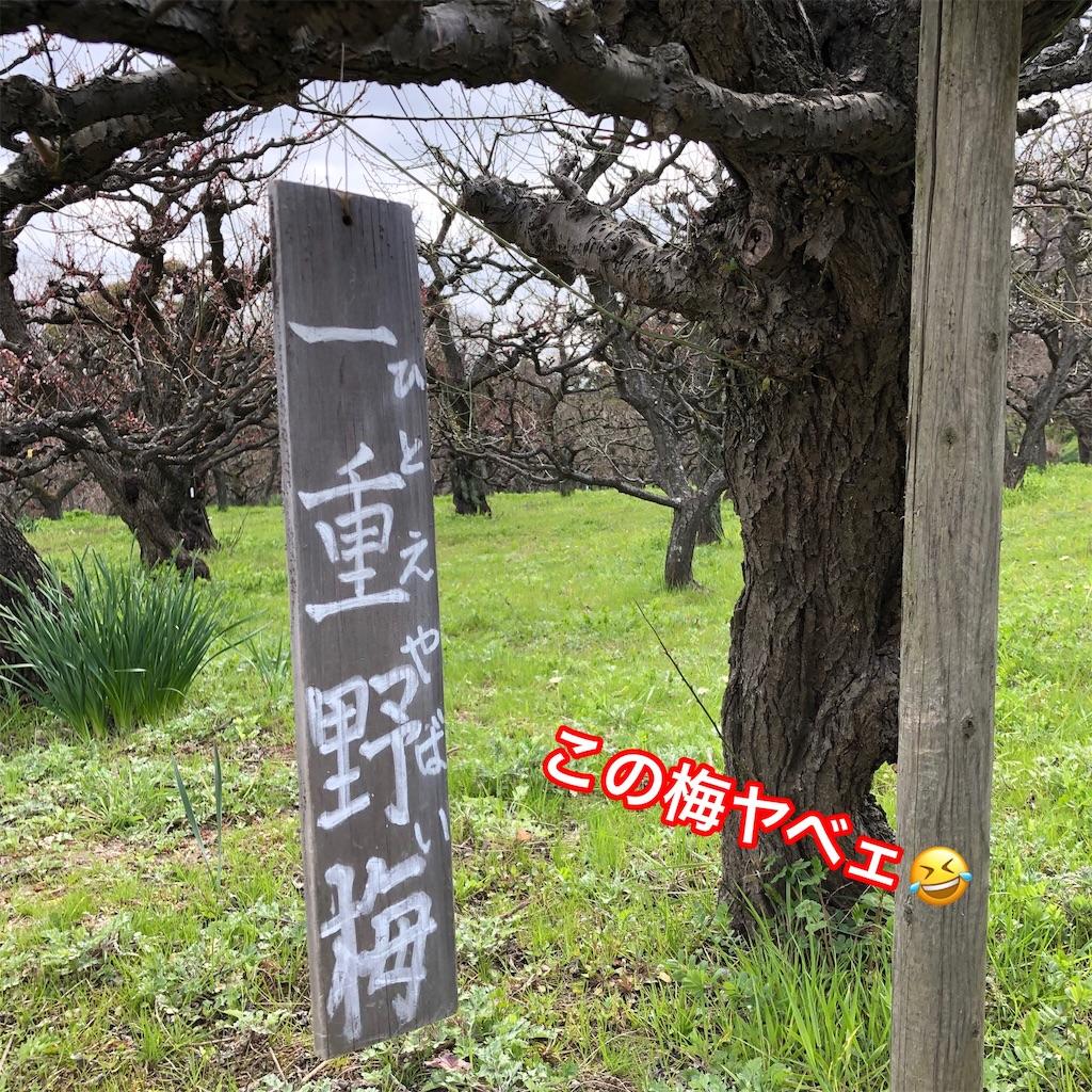f:id:big-yamatohou:20190324174952j:image