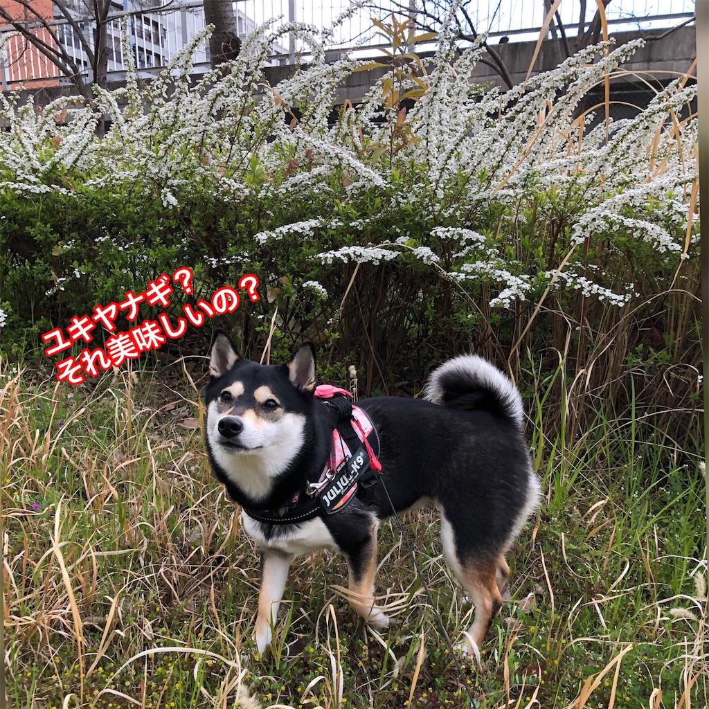 f:id:big-yamatohou:20190324174958j:image