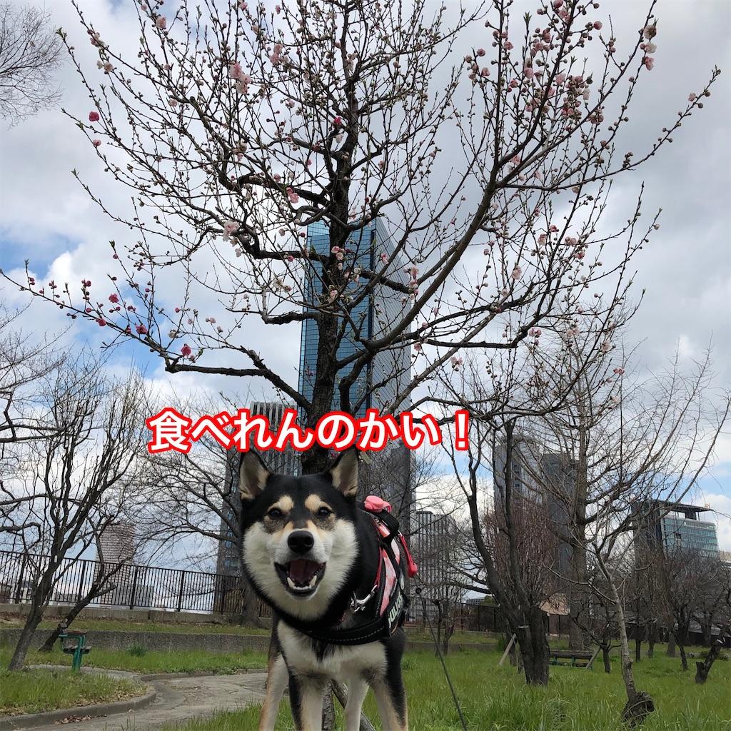 f:id:big-yamatohou:20190324175005j:image
