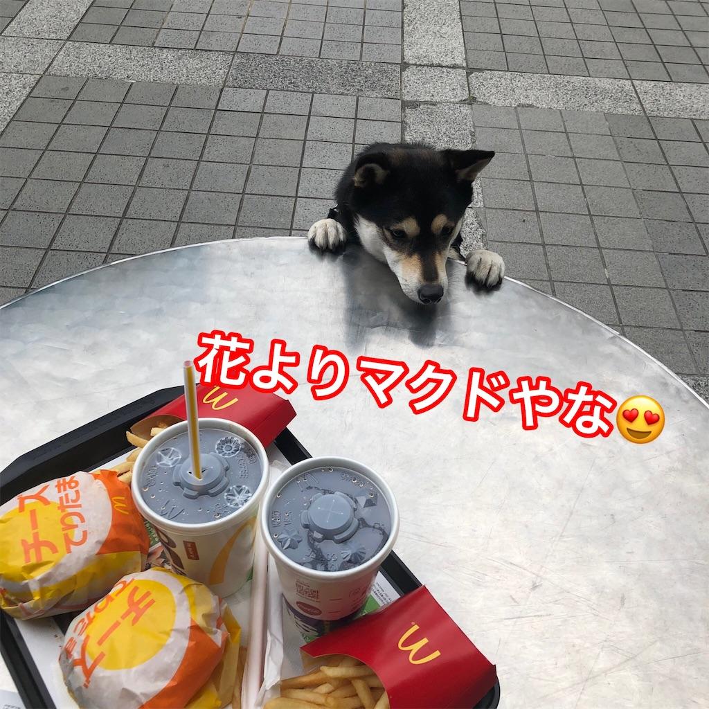 f:id:big-yamatohou:20190324175031j:image