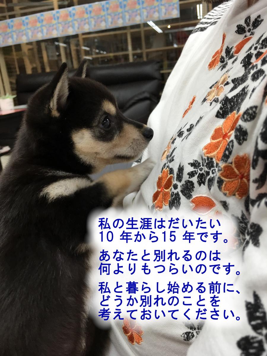 f:id:big-yamatohou:20190420212909j:plain