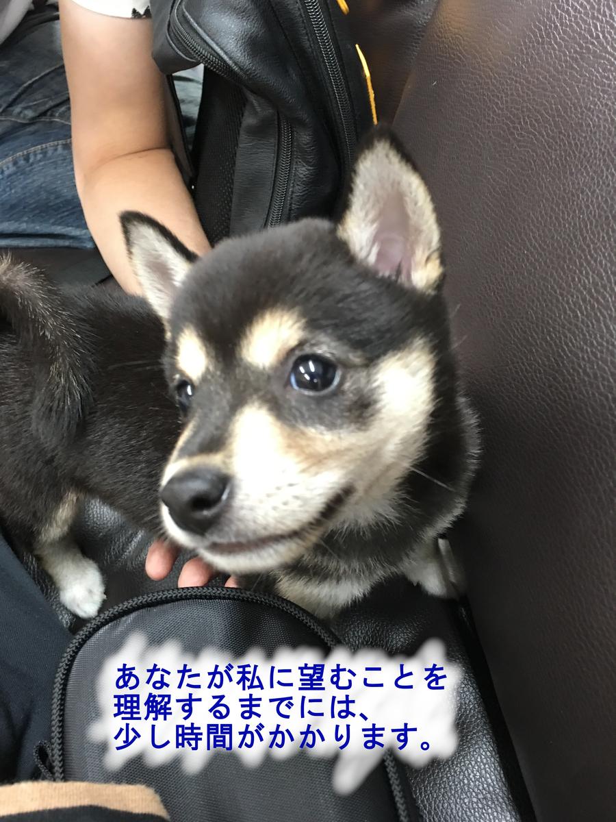 f:id:big-yamatohou:20190420212936j:plain