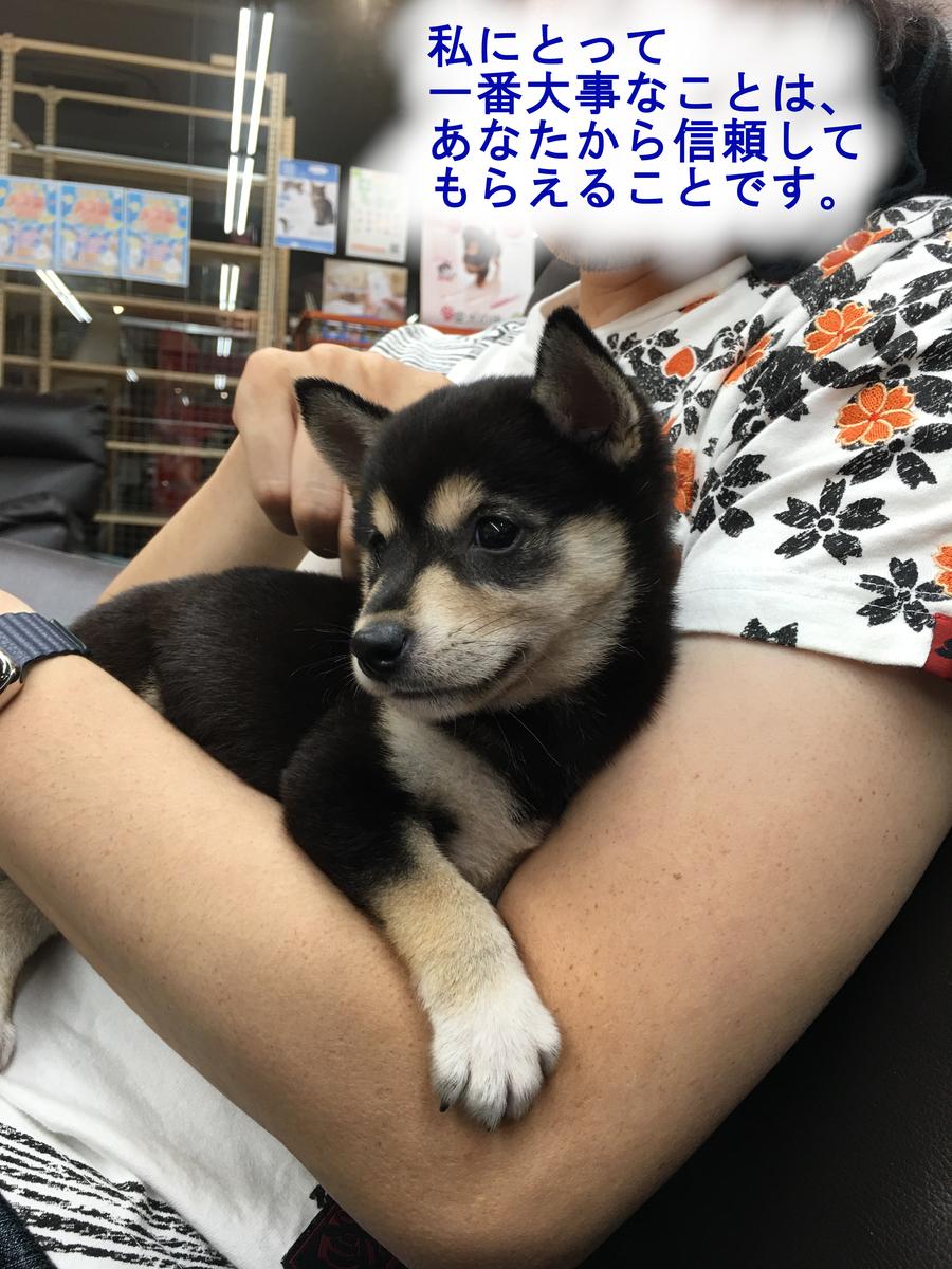 f:id:big-yamatohou:20190420213003j:plain
