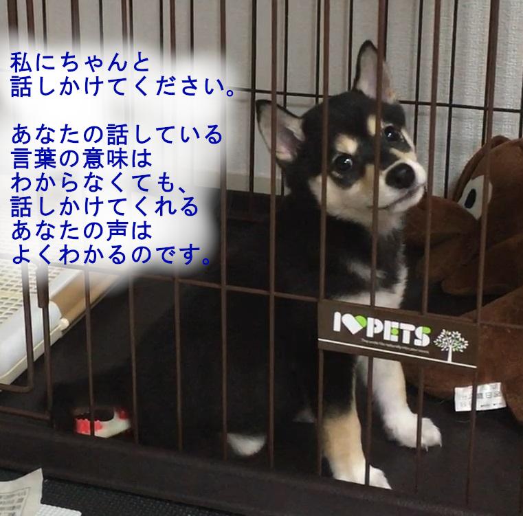 f:id:big-yamatohou:20190420213059j:plain