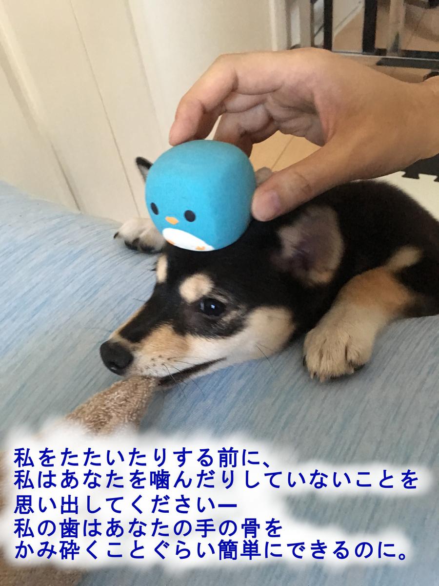 f:id:big-yamatohou:20190420213152j:plain