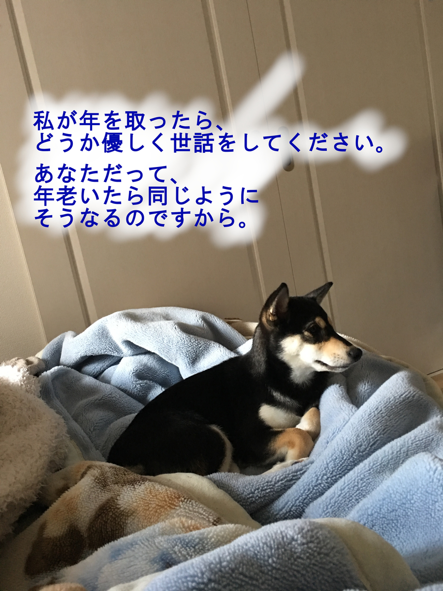 f:id:big-yamatohou:20190420213258j:plain