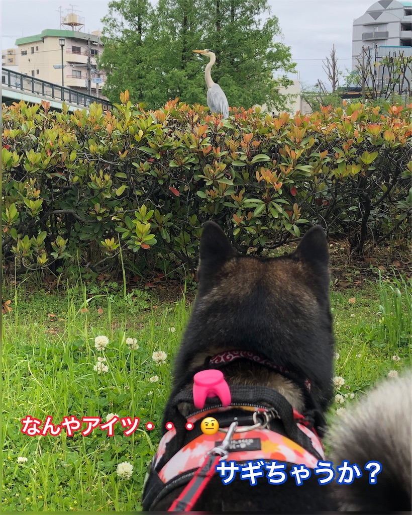 f:id:big-yamatohou:20190501193211j:image