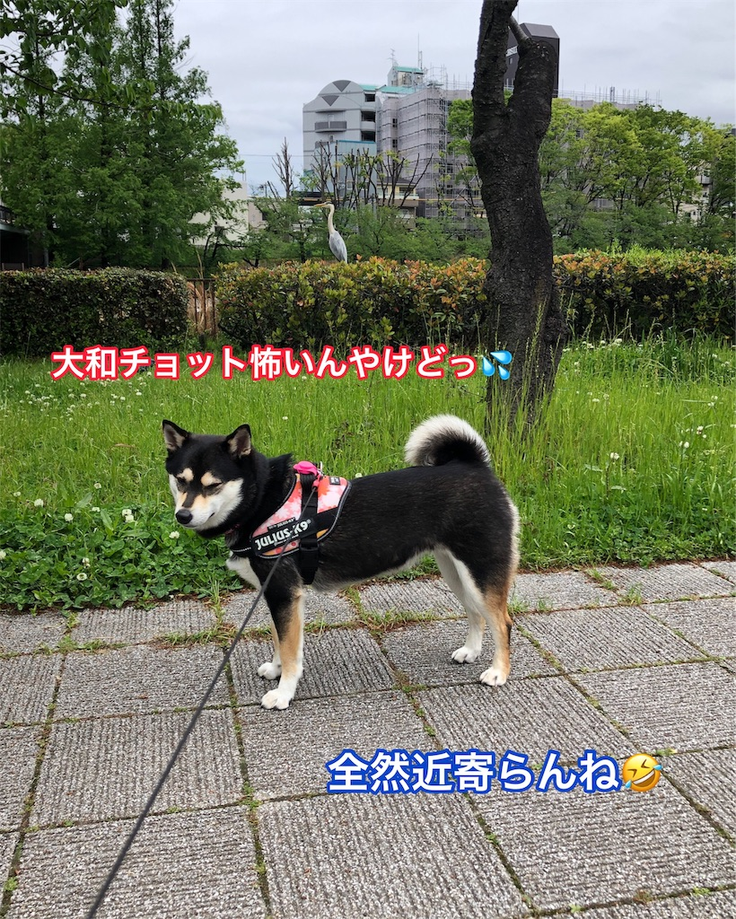 f:id:big-yamatohou:20190501193230j:image