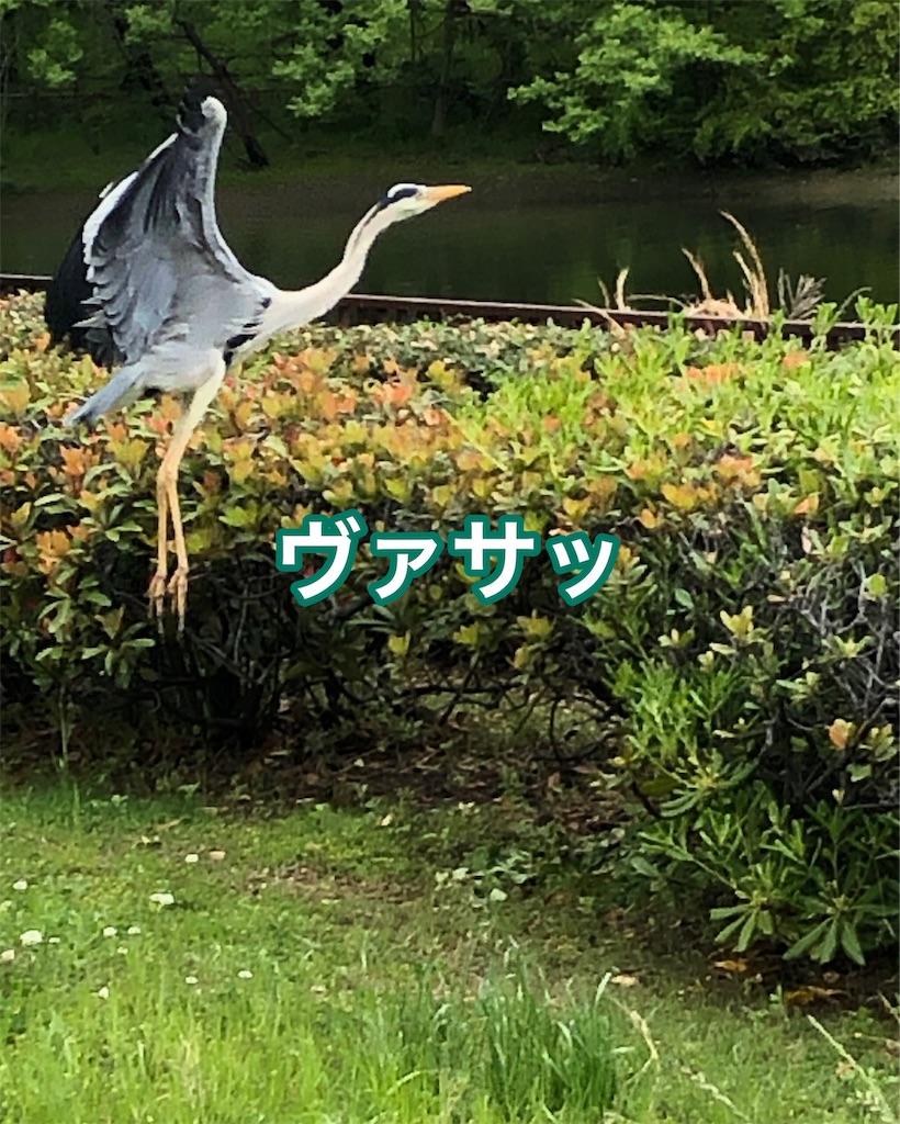 f:id:big-yamatohou:20190501193240j:image