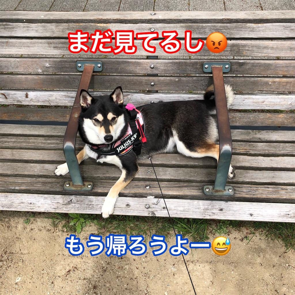 f:id:big-yamatohou:20190501210402j:image
