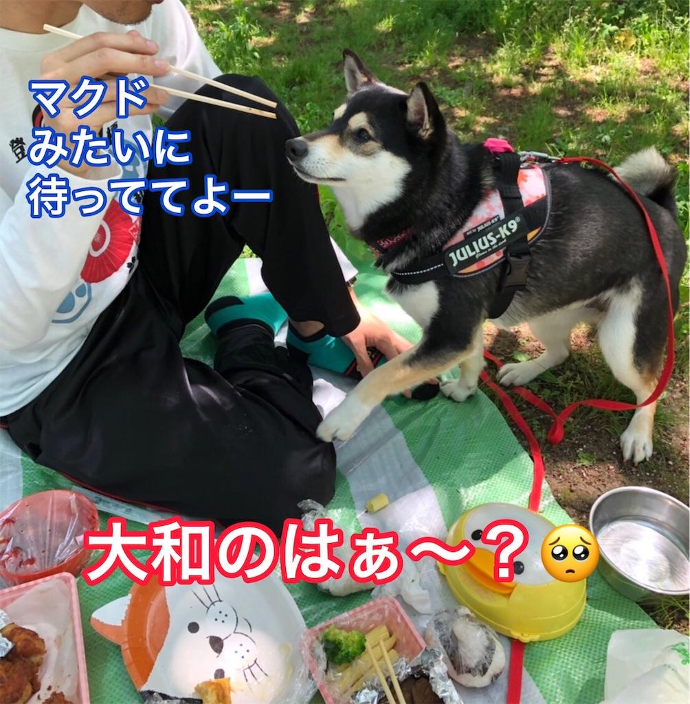 f:id:big-yamatohou:20190512182121j:image