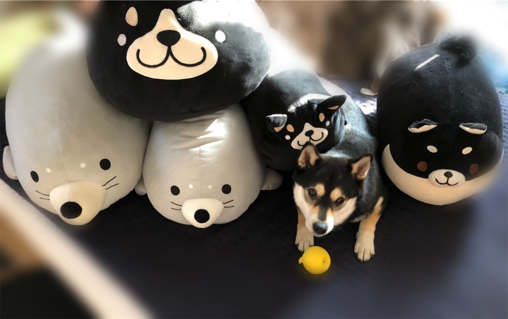 f:id:big-yamatohou:20190516213243j:plain