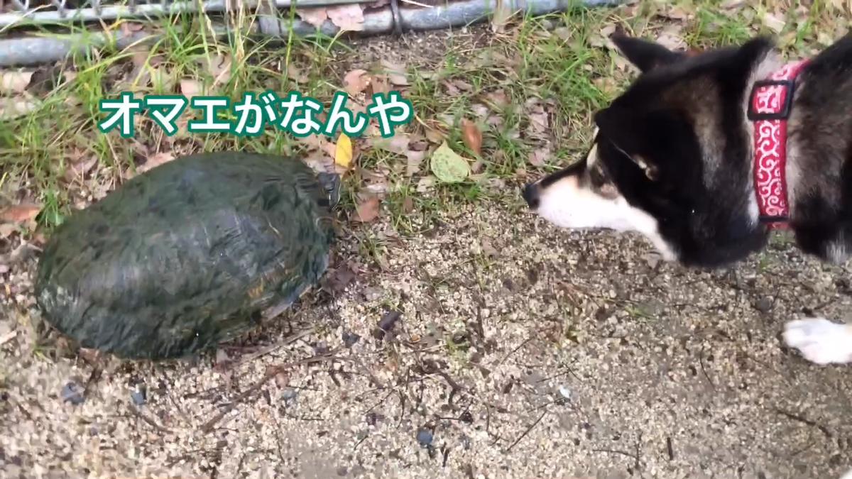 f:id:big-yamatohou:20190728165804p:plain