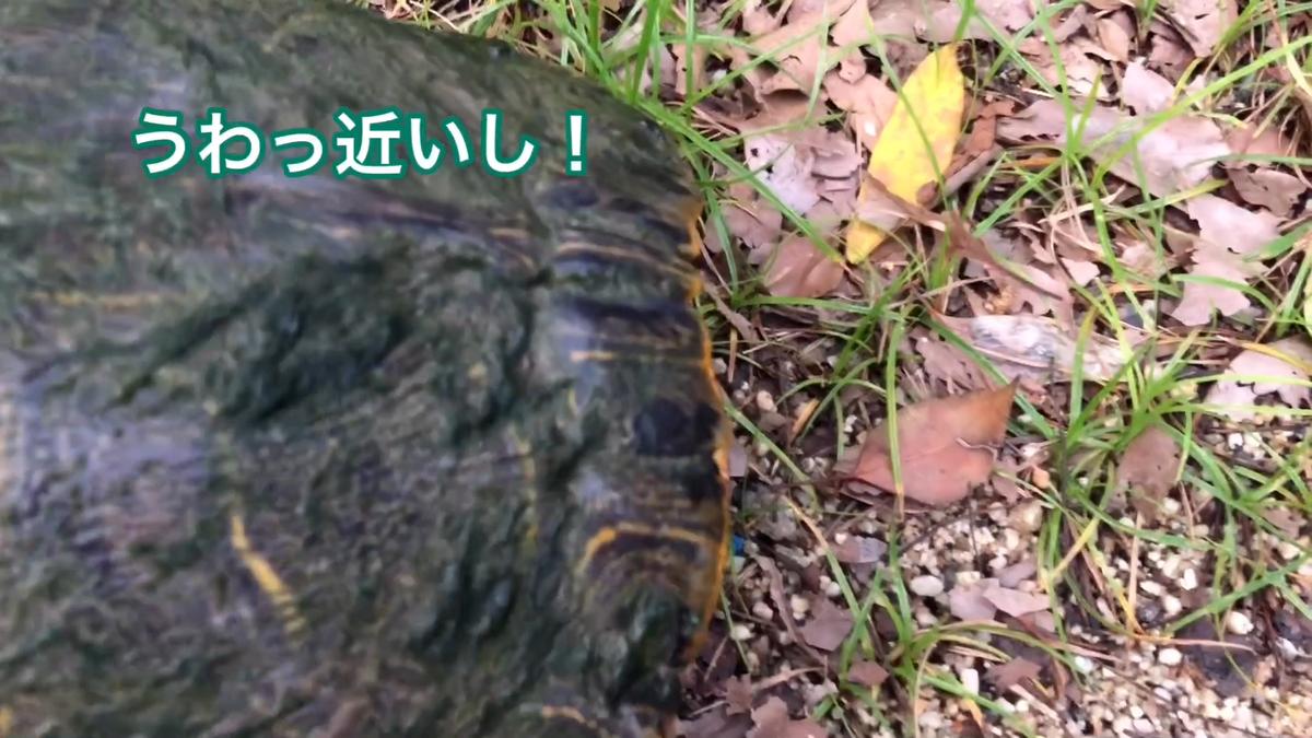 f:id:big-yamatohou:20190728165852p:plain