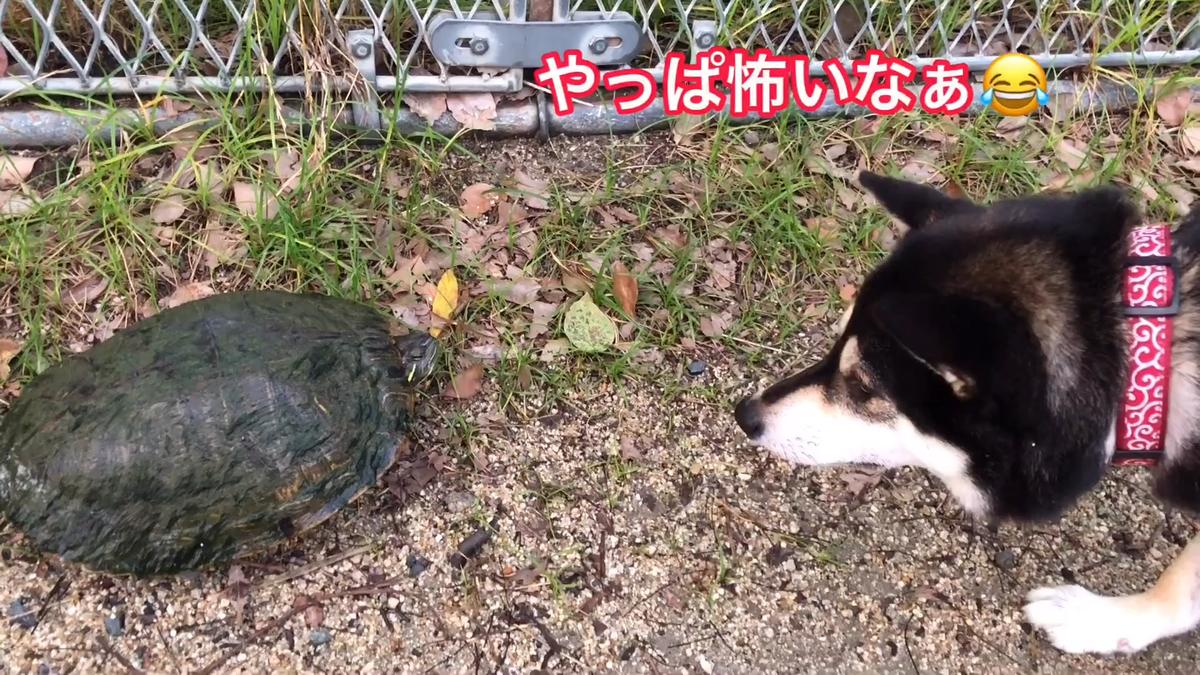 f:id:big-yamatohou:20190728165940p:plain
